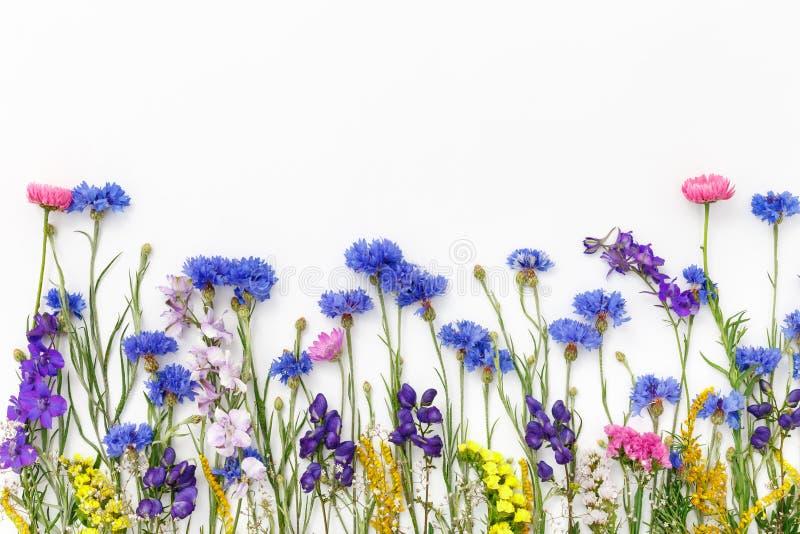 Bloemen op witte achtergrond De hoogste vlakke mening, legt stock afbeelding
