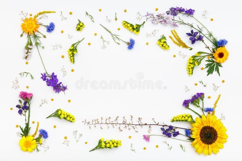 Bloemen op witte achtergrond De hoogste vlakke mening, legt royalty-vrije stock foto
