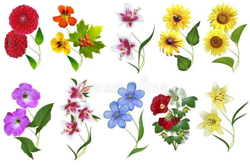 Bloemen op witte achtergrond worden geïsoleerd die vector illustratie