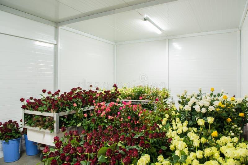 Bloemen in opslag royalty-vrije stock fotografie