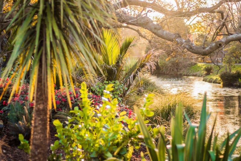 Bloemen, palm, rivier, botanische tuin, Christchurch stock foto's