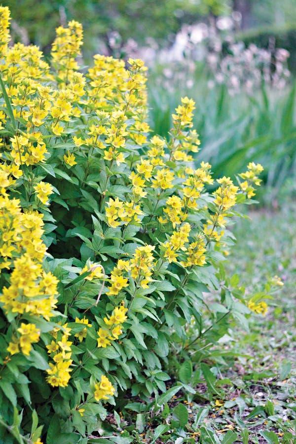 Bloemen in Park royalty-vrije stock foto