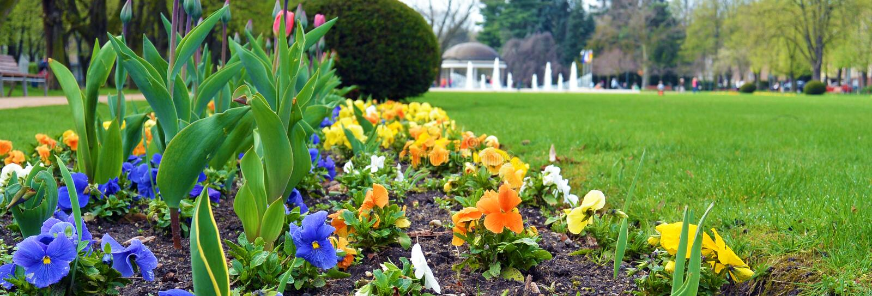 Bloemen in park in stad Podebrady, Tsjechische republiek royalty-vrije stock foto's
