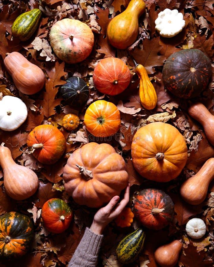 Bloemen plantaardige de herfstachtergrond Geassorteerde pompoen, pompoen, pompoen op de gevallen oranje bladeren van eik Hello no stock fotografie