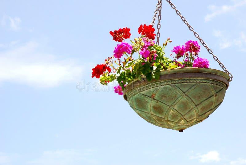 Bloemen in pot stock foto's