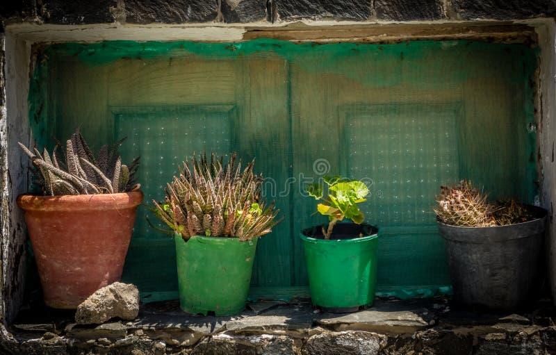 Bloemen in potten stock afbeeldingen