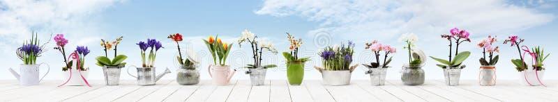 Bloemen in potten geplaatst die op witte houten lijst en hemelachtergrond, Webbanner met exemplaarruimte worden geïsoleerd voor b royalty-vrije stock fotografie
