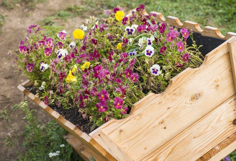 Bloemen in potten in houten doos op achtergrond van tuin stock fotografie