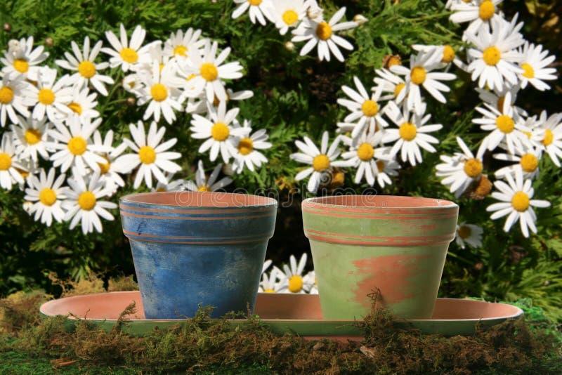 Bloemen Potten op Madeliefjes royalty-vrije stock fotografie