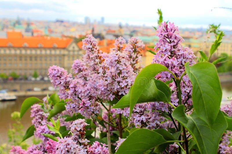 Bloemen in Praha stock afbeeldingen