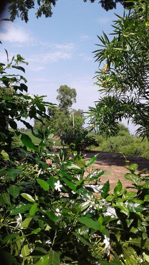 Bloemen in Punjab stock foto