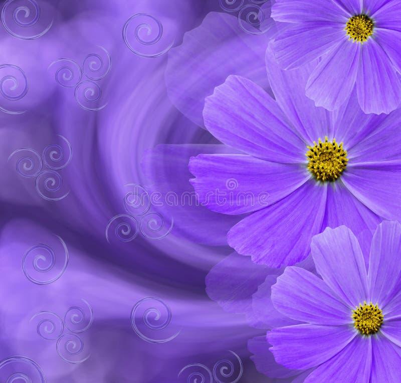 Bloemen purpere mooie achtergrond De samenstelling van de bloem Prentbriefkaar met violette bloemen van madeliefjes op een purper royalty-vrije stock afbeeldingen