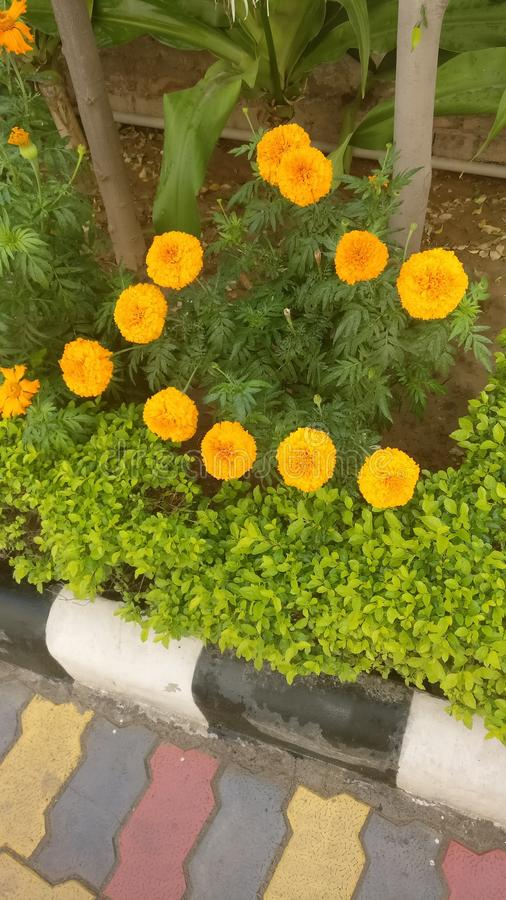 Bloemen in rechte lijn royalty-vrije stock afbeelding