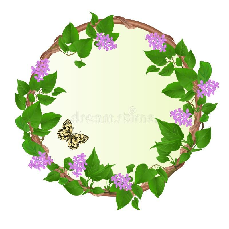 Bloemen ronde kadersering met galathea uitstekende vector feestelijke van Vlindermelanargia editable illustratie als achtergrond stock illustratie