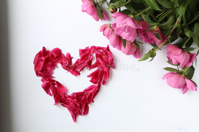 Bloemen roze pioenen op een witte achtergrond en bloemblaadjesliefde, Word liefde van bloemblaadjes wordt gemaakt dat stock foto's