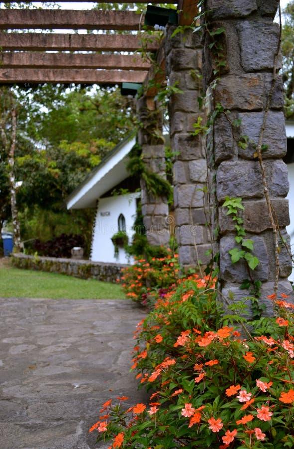 Bloemen in Selva Negra (Ecolodge), Matagalpa, Nicaragua stock foto