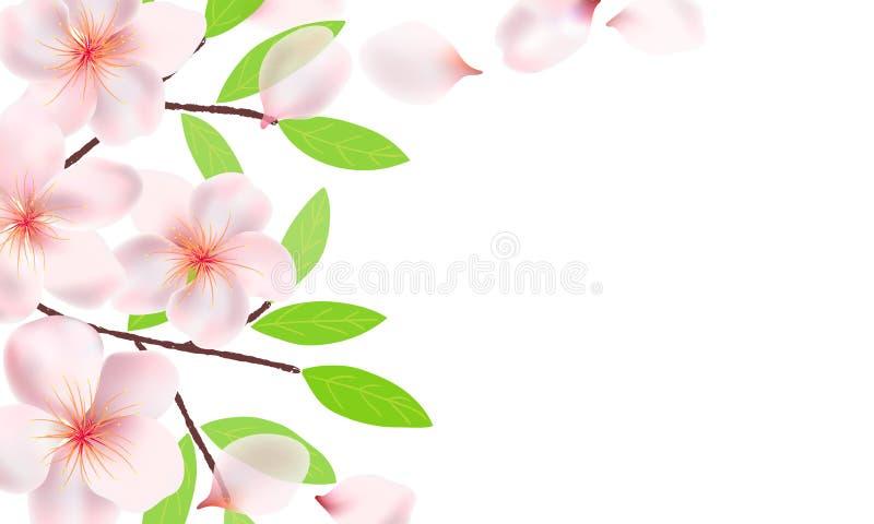 Bloemen, takken en bladeren van Sakura-achtergrond Kersenbloesems, vliegende bloemblaadjes Takken met groene bladeren stock illustratie