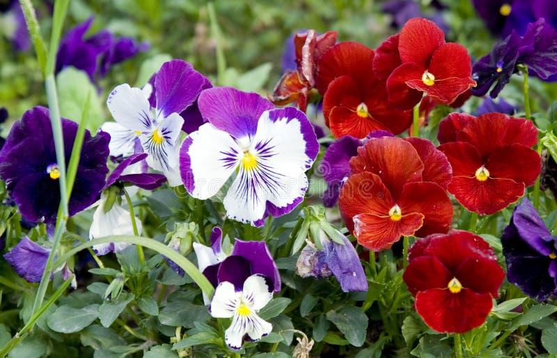 Bloemen in tuin stock foto's