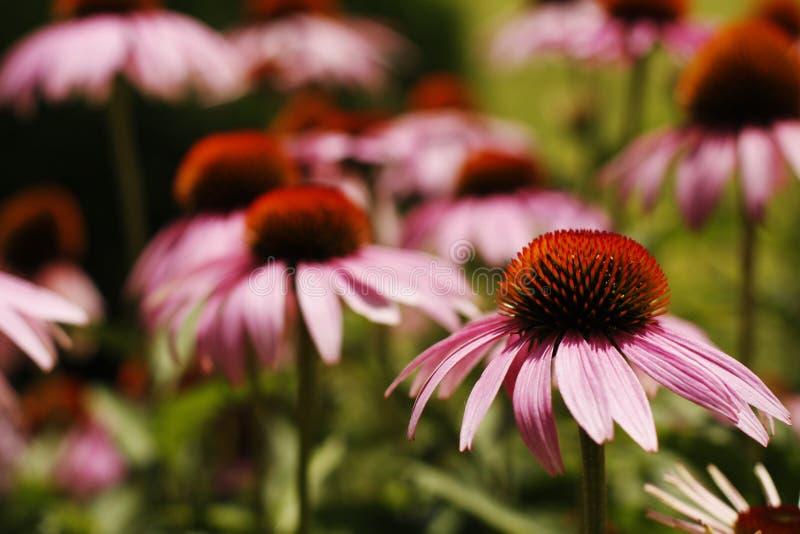 Download Bloemen in Tuin stock foto. Afbeelding bestaande uit life - 29510448