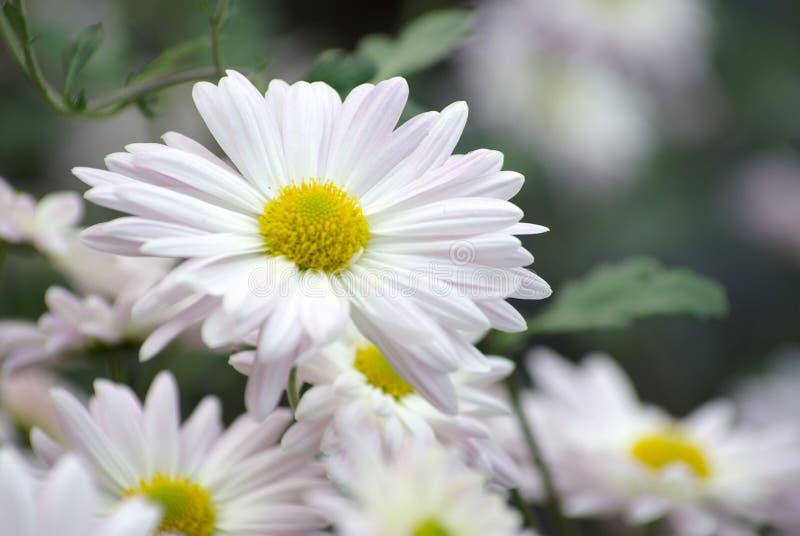 Bloemen in tuin stock fotografie