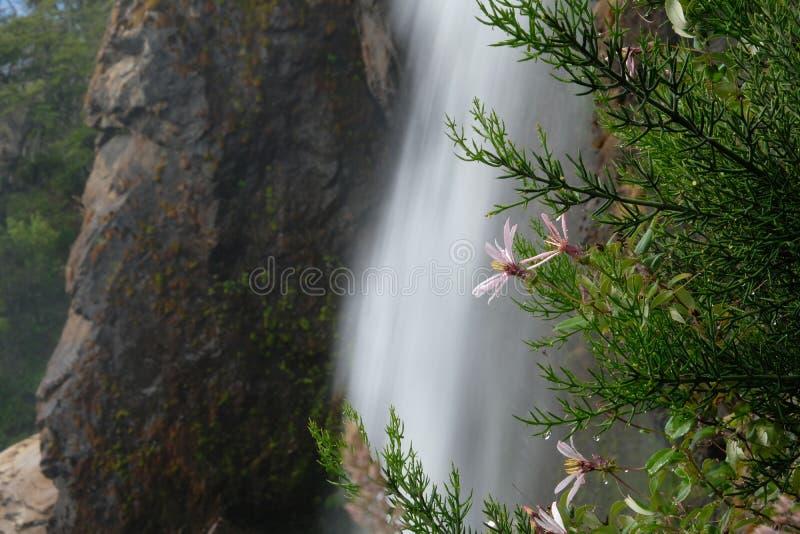 Bloemen vóór een vreedzame waterval in Chili stock fotografie