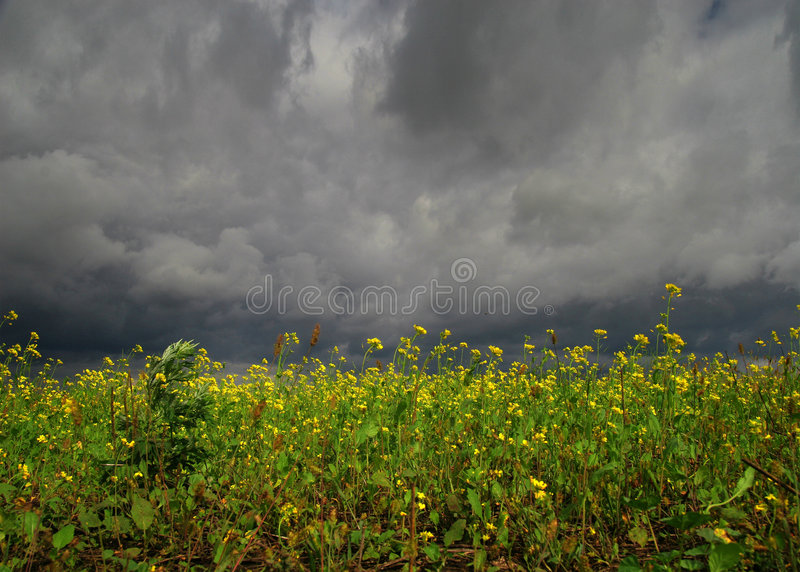 Bloemen Vóór Onweersbui Stock Foto's