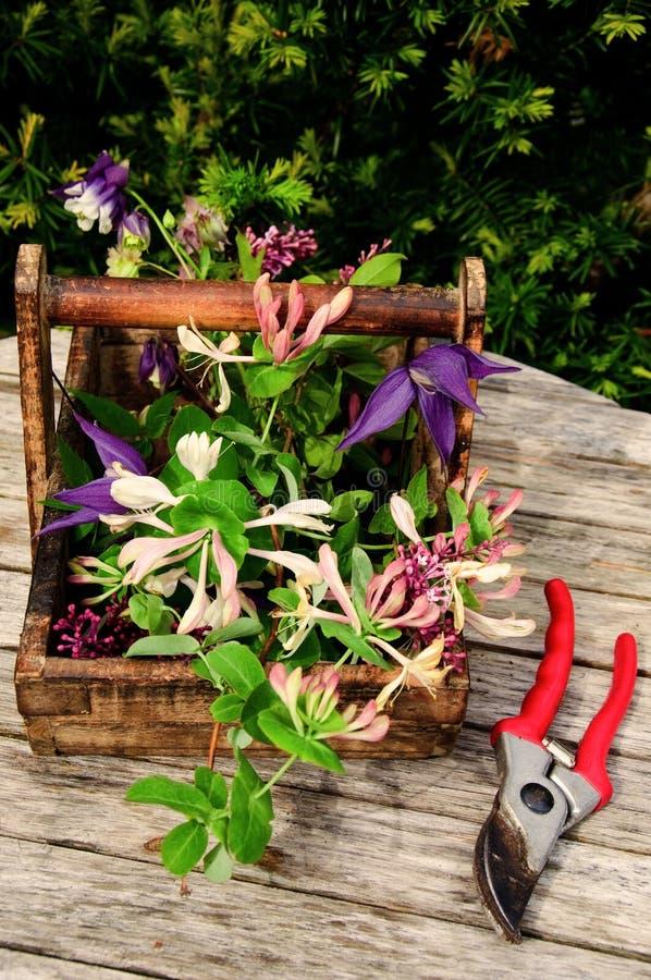 Bloemen van de tuin stock afbeelding