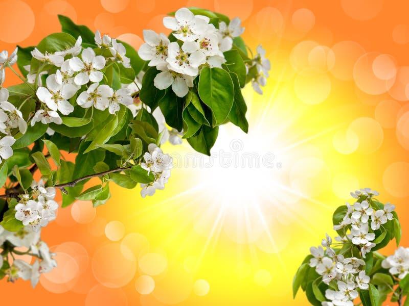 Bloemen van een Apple-boom in de hemel stock foto
