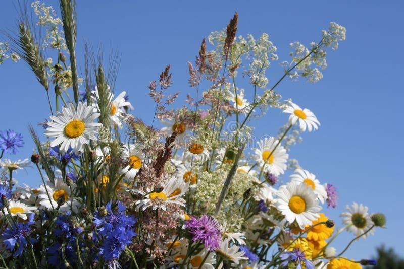 Bloemen van het Gebied royalty-vrije stock afbeeldingen