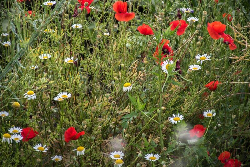 Bloemen van het gebied royalty-vrije stock foto's