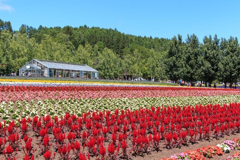 bloemen van het Tomita-landbouwbedrijf in Hokkaido met sommige toeristen op achtergrond royalty-vrije stock fotografie