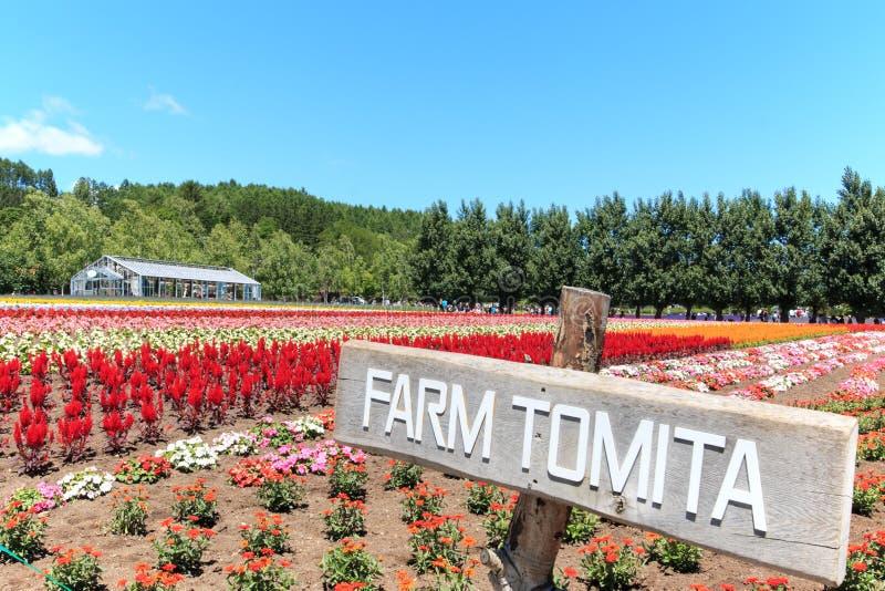 bloemen van het Tomita-landbouwbedrijf in Hokkaido met sommige toeristen op achtergrond stock afbeelding