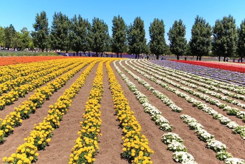 bloemen van het Tomita-landbouwbedrijf in Hokkaido met sommige toeristen op achtergrond royalty-vrije stock foto