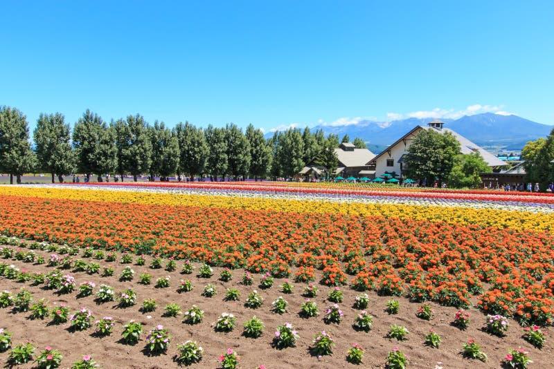 bloemen van het Tomita-landbouwbedrijf in Hokkaido met sommige toeristen op achtergrond stock afbeeldingen