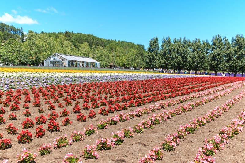 bloemen van het Tomita-landbouwbedrijf in Hokkaido met sommige toeristen op achtergrond stock foto