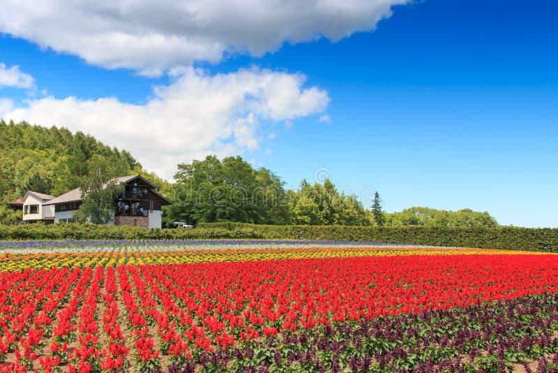 bloemen van het Tomita-landbouwbedrijf in Hokkaido met sommige toeristen op achtergrond stock fotografie
