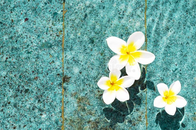 Bloemen van plumeria in de turkooise waterspiegel De exemplaar-ruimte van waterschommelingen De achtergrond van het kuuroordconce stock afbeeldingen
