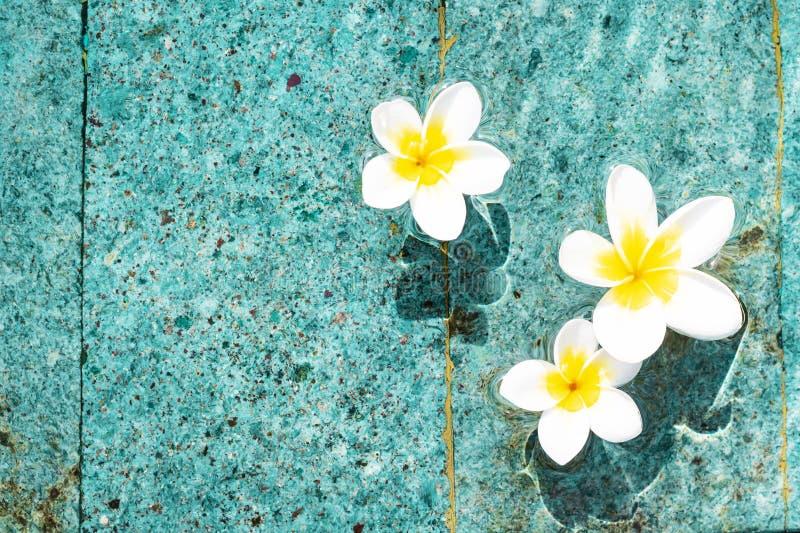 Bloemen van plumeria in de turkooise waterspiegel De exemplaar-ruimte van waterschommelingen De achtergrond van het kuuroordconce stock afbeelding