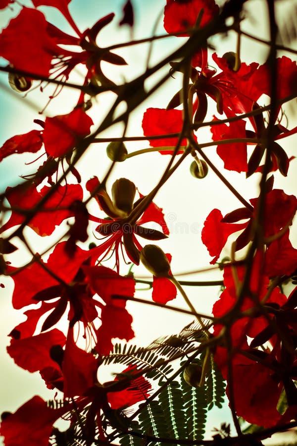 Bloemen van rood royalty-vrije stock fotografie