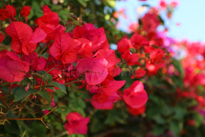 Bloemen van Spanje royalty-vrije stock foto