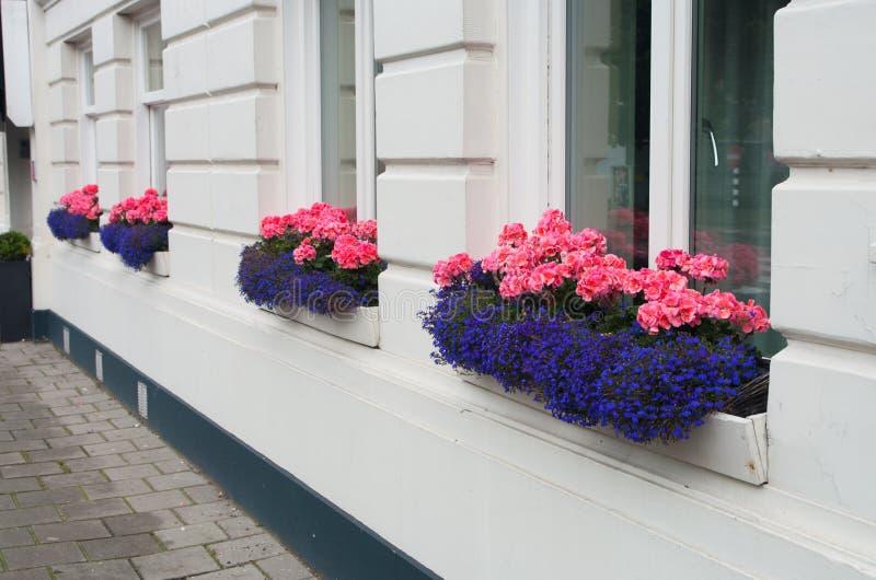 Bloemen in venster royalty-vrije stock foto's
