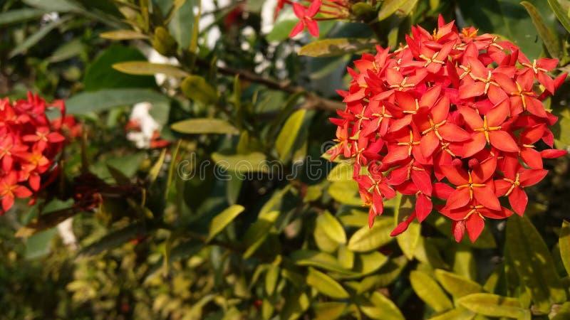 Bloemen verse groene gloed in de avond royalty-vrije stock afbeeldingen