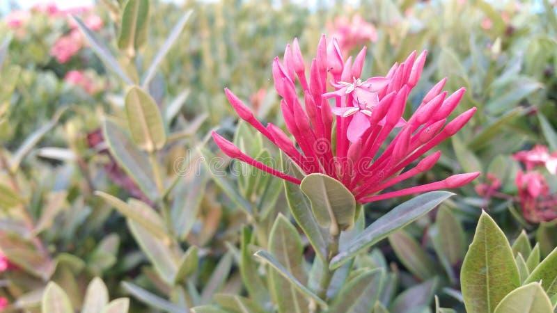 Bloemen verse groene gloed in de avond royalty-vrije stock fotografie