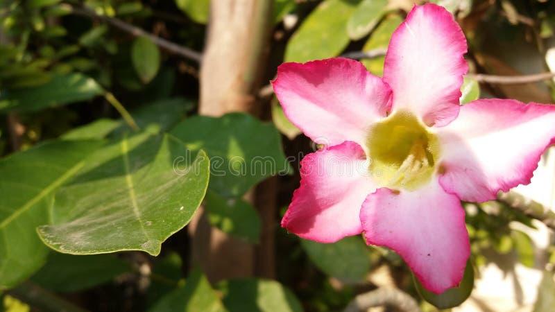 Bloemen verse groene gloed in de avond royalty-vrije stock afbeelding