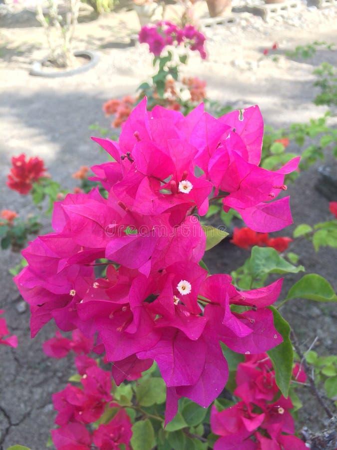 Bloemen voor eenzaam royalty-vrije stock fotografie