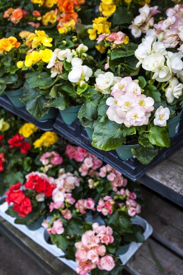 Bloemen voor verkoop in kinderdagverblijf stock afbeelding