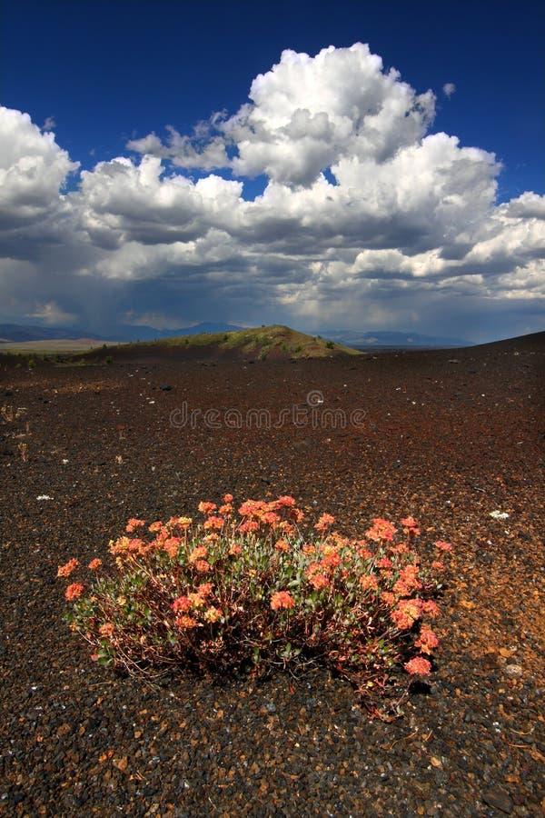 Bloemen in Vulkanisch Landschap stock foto