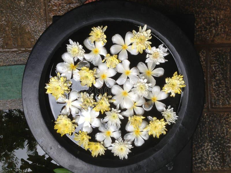 Bloemen in water royalty-vrije stock afbeelding