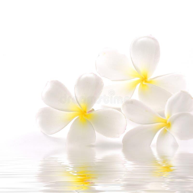 Bloemen in water royalty-vrije stock fotografie