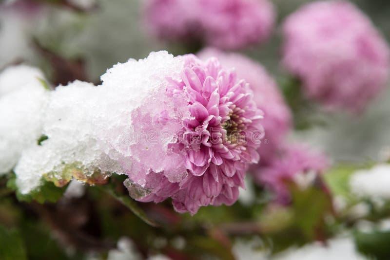 Bloemen in Wintergarden royalty-vrije stock foto